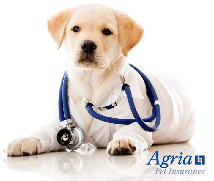 agria pet insurance promo code
